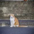 写真: 谷中の猫さん