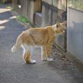 写真: 谷中霊園の猫さん