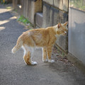Photos: 谷中霊園の猫さん