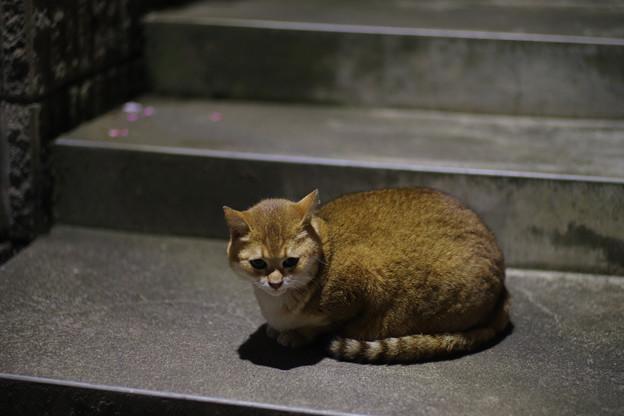写真: あんな猫さんも