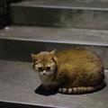 Photos: あんな猫さんも