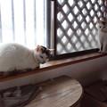 Photos: 三毛親子