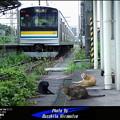 写真: 鶴見線・扇町の猫