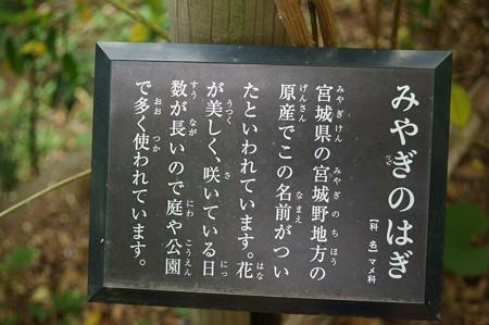 宮城野萩(ミヤギノハギ)