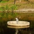 写真: じゅんさい池緑地