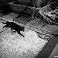 Photos: 街猫565