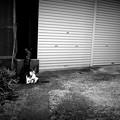 街猫840