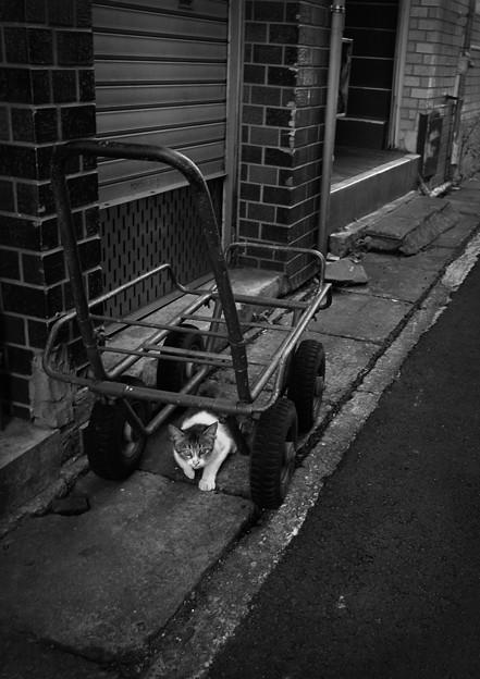 街猫862