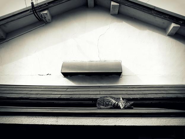 写真: 街猫869
