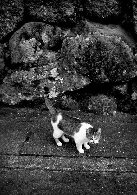街猫872