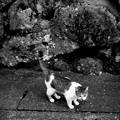 写真: 街猫872