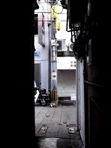 街猫879