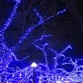 写真: 青の洞窟