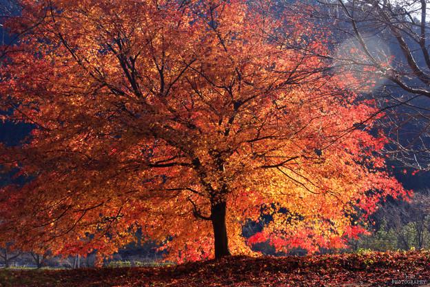 写真: 美山かやぶきの里 紅葉