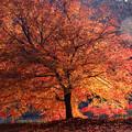 美山かやぶきの里 紅葉