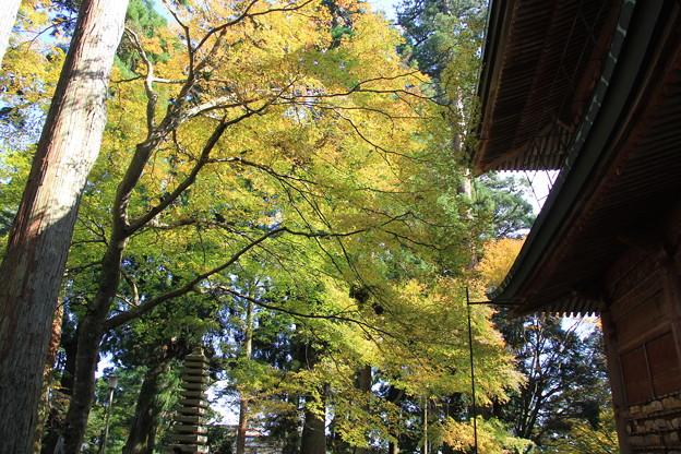 黄葉もきれい