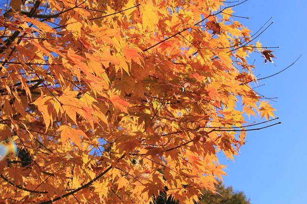 Photos: 秋だね