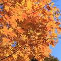 写真: 秋だね