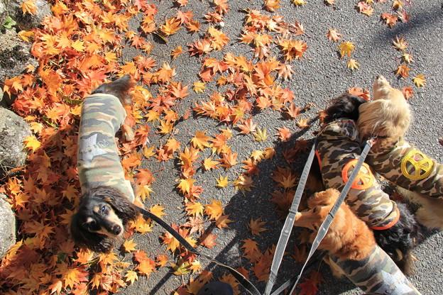 色づいた葉とコラボ