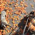 写真: 色づいた葉とコラボ