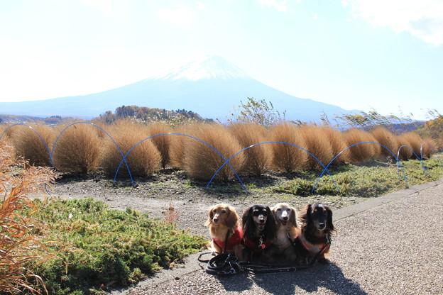 花街道で富士山をバックに
