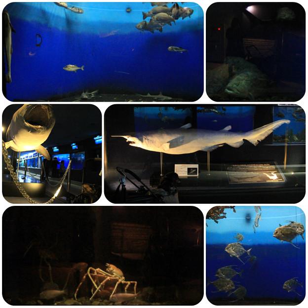 写真: 水族館3