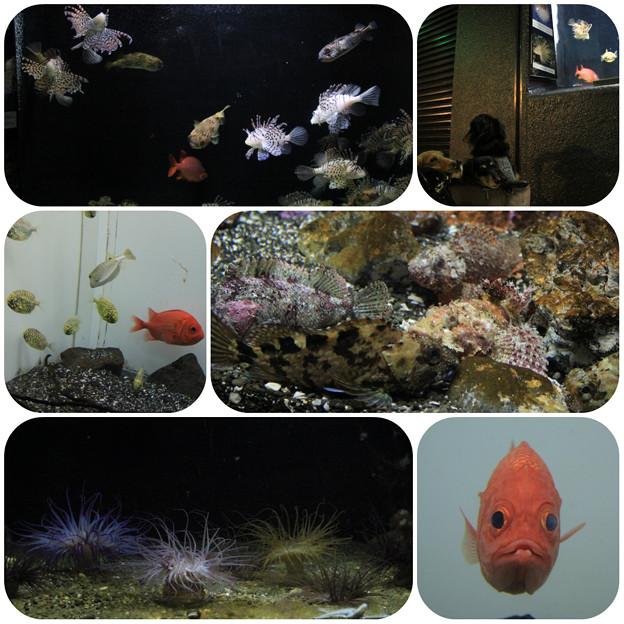 写真: 水族館4
