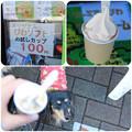 写真: びわソフト_お試しカップ