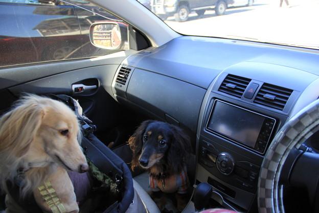 写真: 車でお出かけ