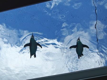 20141205 森きらら ペンギン館14