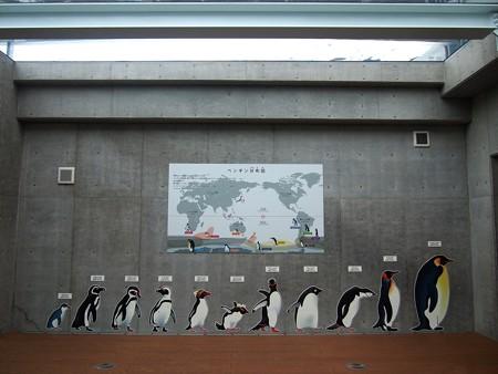 20141205 森きらら ペンギン館07