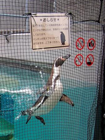 20141205 森きらら ペンギン館22