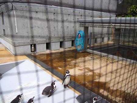 20141205 森きらら ペンギン館37