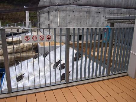 20141205 森きらら ペンギン館36