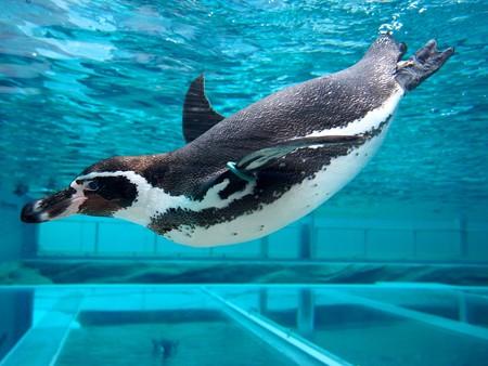 20141205 森きらら ペンギン館78