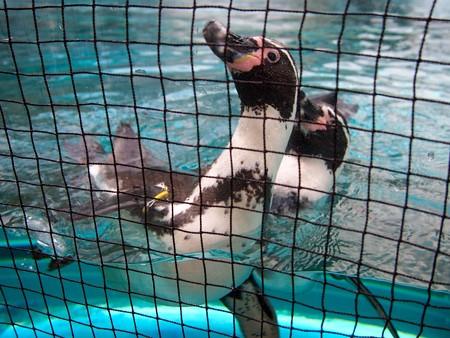 20141205 森きらら ペンギン館75