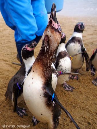 20141206 長崎 ペンギンビーチ04