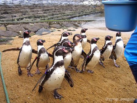 20141206 長崎 ペンギンビーチ03