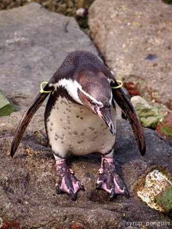 20141206 長崎 ペンギンビーチ07