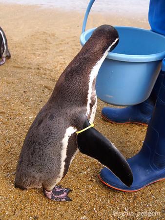 20141206 長崎 ペンギンビーチ18