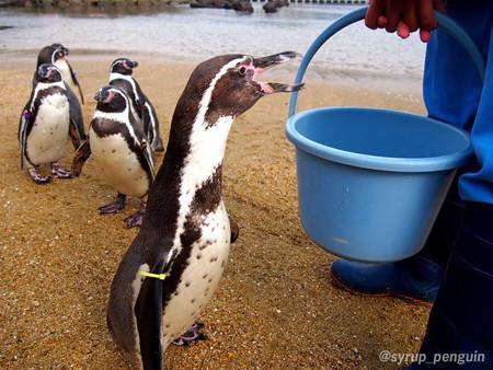 20141206 長崎 ペンギンビーチ17