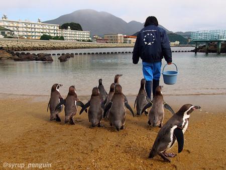 20141206 長崎 ペンギンビーチ13