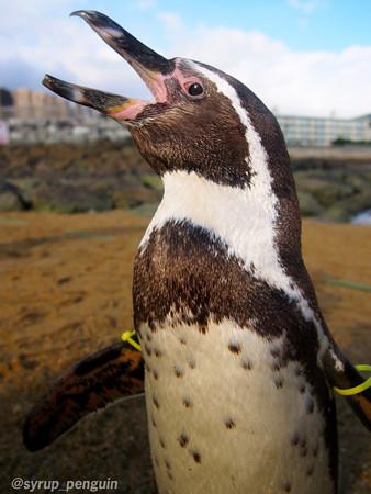 20141206 長崎 ペンギンビーチ22