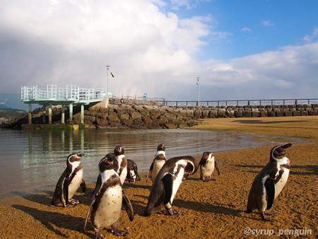 20141206 長崎 ペンギンビーチ27