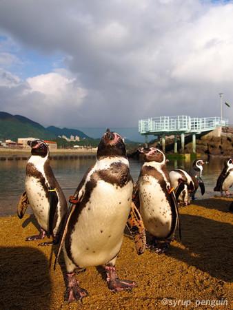 20141206 長崎 ペンギンビーチ26