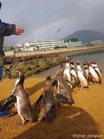 20141206 長崎 ペンギンビーチ24