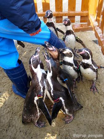 20141206 長崎 ペンギンビーチ37