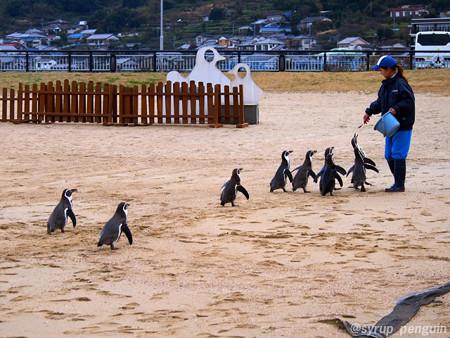 20141206 長崎 ペンギンビーチ34