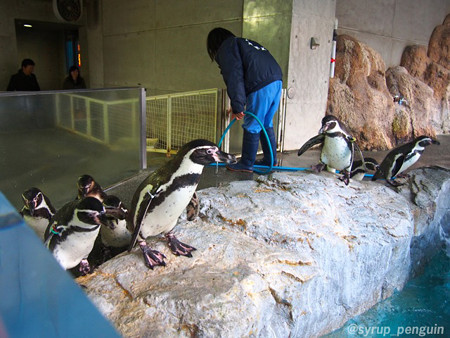 20141206 長崎 ペンギンビーチ58