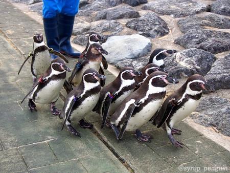 20141206 長崎 ペンギンビーチ53